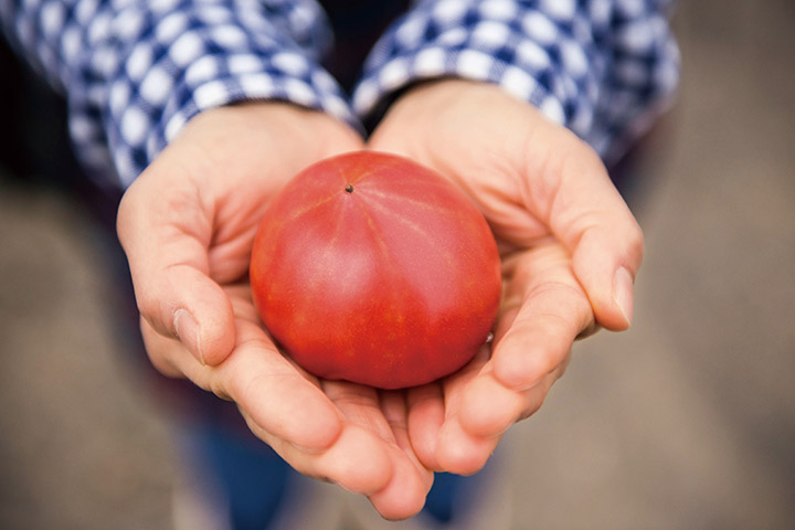 トマト栽培に着手